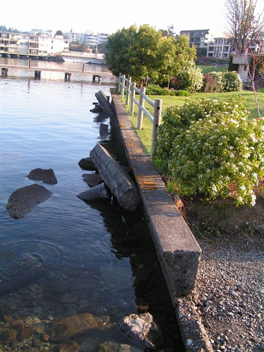 This image shows a piece of David Brink's bulkhead that had broken free and fallen into Lake Washington