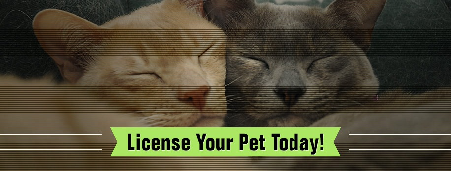 Animal-Services-License-Your-Pet-Banner.jpg